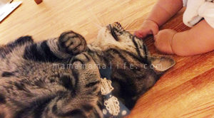 赤ちゃんの手と猫