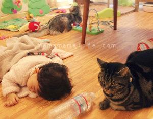 赤ちゃんと2匹の猫