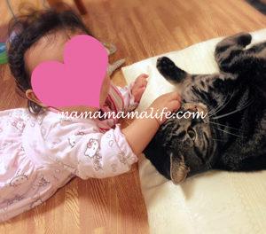 生後8ヶ月 つかまり立ち 赤ちゃん ベビー 乳児 猫